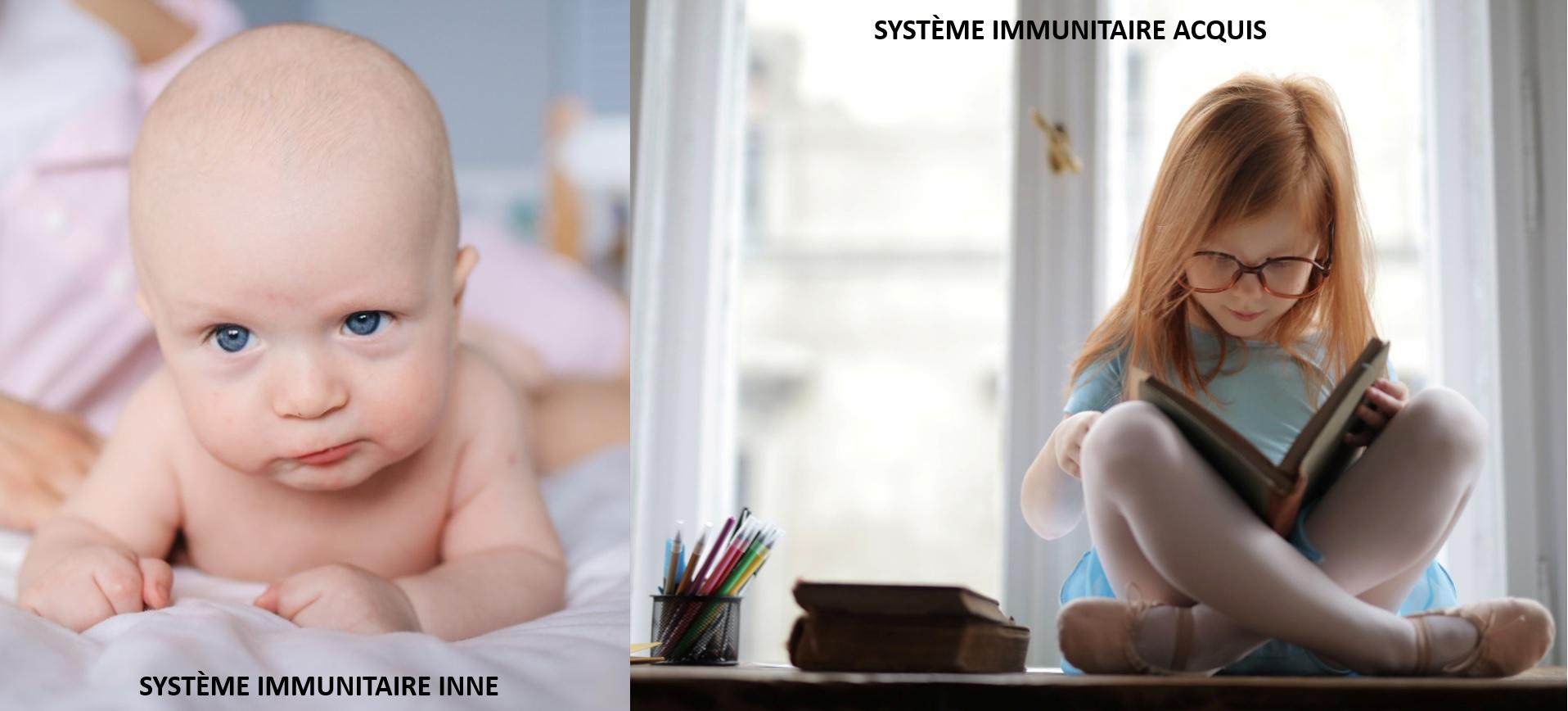 Système Immunitaire inné et acquis